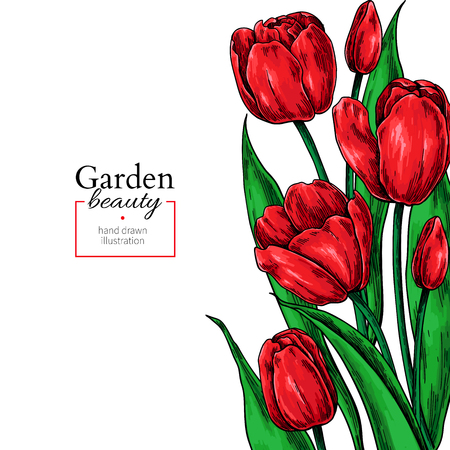 Illustration pour Tulip flower and leaves drawing border. Vector hand drawn floral frame. Botanical  sketch. Great for tattoo, wedding invitations, greeting cards, decor - image libre de droit