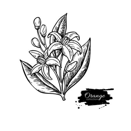 Illustration pour Orange tree flower bloom. - image libre de droit
