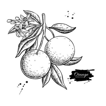 Illustration pour Orange branch  drawing - image libre de droit