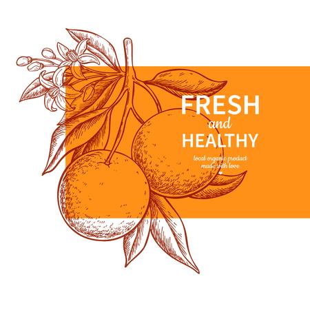 Illustration for Orange label vector drawing. Citrus fruit engraved template. Hand drawn summer illustration. Vintage banner, product packaging, design concept. Tropical juice poster, grapefruit sign - Royalty Free Image