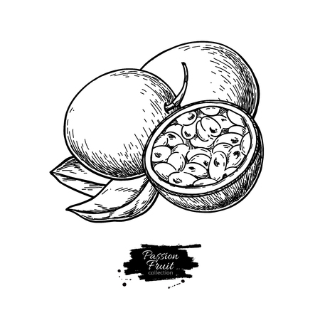 Passion fruit vector drawing. Hand drawn tropical food illustration. Engraved summer passionfruit.