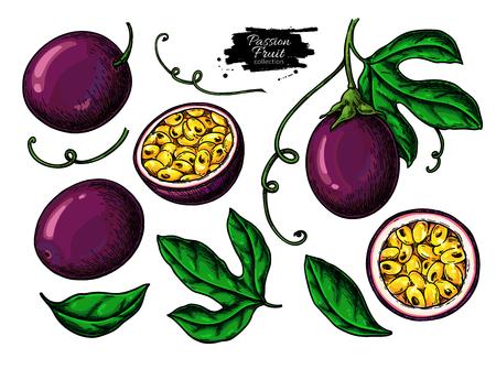 Passion fruit  drawing set.