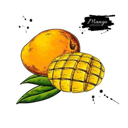 Illustration pour Mango vector drawing. Hand drawn tropical fruit illustration. - image libre de droit