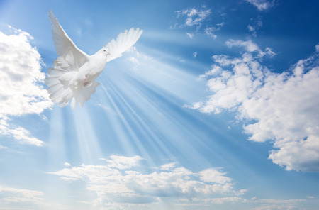 Photo for Flying white dove and bright sunbeams on the background of blue sky with fluffy light white clouds - Royalty Free Image