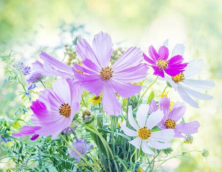 Photo pour Beautiful multicolored bouquet of wildflowers on a blurred natural background - image libre de droit