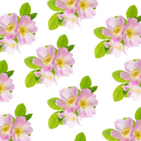 Photo for Three delicate pink wild rose flowers with green leaves isolated on white background as a seamless pattern - Royalty Free Image
