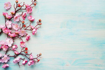 Foto für Abstract spring background of painted blue board with branch of flowering cherry branch covered with pink flowers - Lizenzfreies Bild