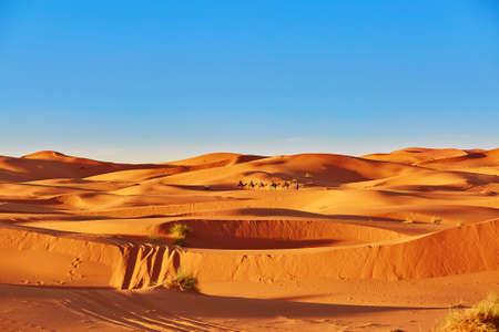 Camel caravan going through the sand dunes in the Sahara Desert, Merzouga, Morocco