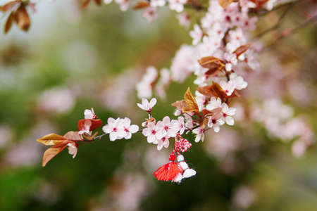 Photo pour Branch of blossoming cherry tree with red and white martisor - traditional symbol of the first spring day - image libre de droit