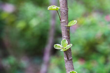 Foto de The Young tree seedling grow from stump, beginning new life and rebirth concept - Imagen libre de derechos