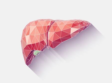Ilustración de Vector illustration of human liver with faceted low-poly geometry effect - Imagen libre de derechos