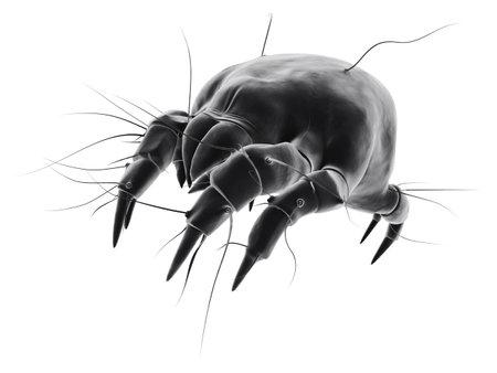 isolated mite