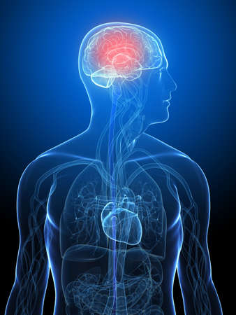 transparent human body with highlighted brain