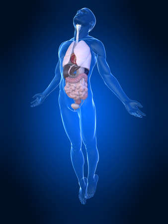 uprising human body with organs