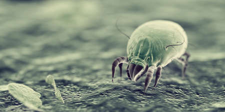Photo for 3d rendered illustration of house dust mites - Royalty Free Image