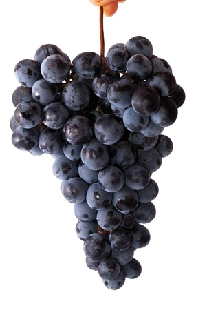 Bunch of blue grapes isolated on the white background