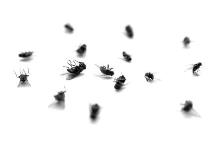 Foto de Many dead flies isolated on white background - Imagen libre de derechos