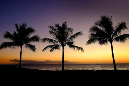 Photo pour Palm trees silhouetted against sunset with ocean in background - image libre de droit