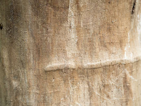 Photo for Texture of old wood with scratches close up. - Royalty Free Image