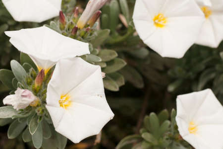 white flowers grown in the country in the spring