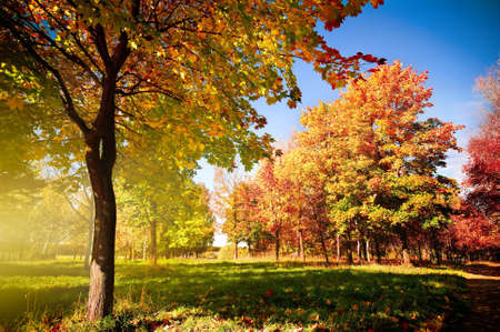 Photo for autumn park - Royalty Free Image