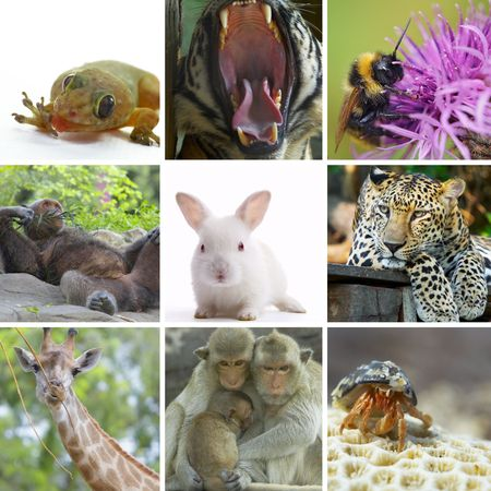 Animal  theme photo collage composed of few images