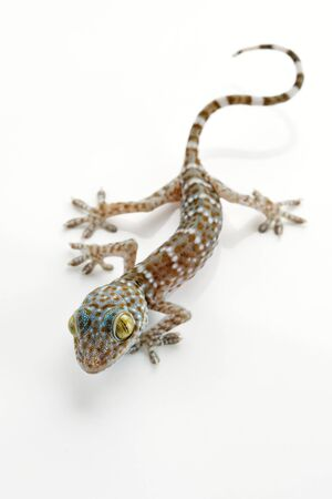 close up view of nice colorful lizard  on white back