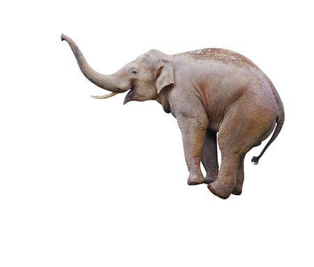 Foto de Elephant balancing on object, isolated on white - Imagen libre de derechos