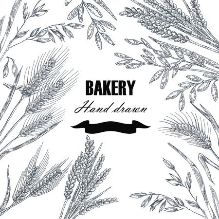 Vektor für Bread design template. Hand drawn wheat set. Vector illustration - Lizenzfreies Bild