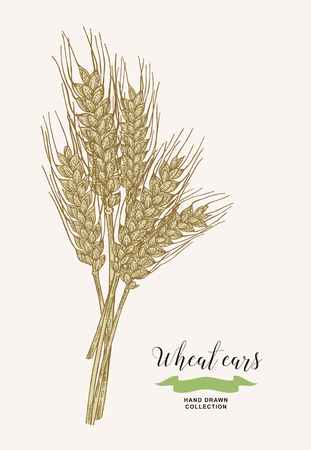 Illustration for Wheat ears. Rustic bouquet design. Hand drawn vector illustration. - Royalty Free Image