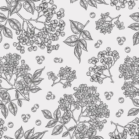 Illustration pour Elderberry and elderflower seamless pattern. Hand drawn sambucus flowers, leaves and berries. Vector illustration vintage. - image libre de droit