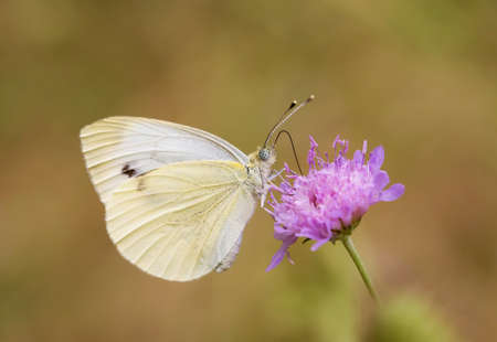 Photo pour Beatiful butterfly on the various plant in nature. - image libre de droit