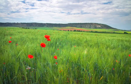 Beautiful mountain landscape with field and red poppies.