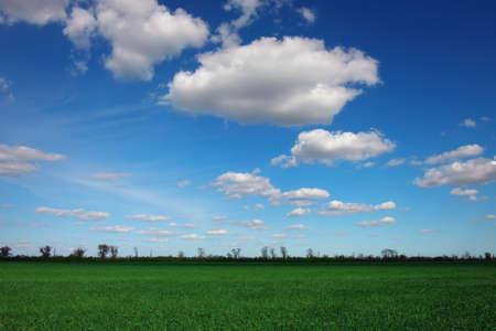 Photo pour Beautiful landscape with an amazing blue cloudy sky and green grass - image libre de droit