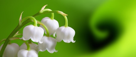 Photo pour lily of the valley - image libre de droit