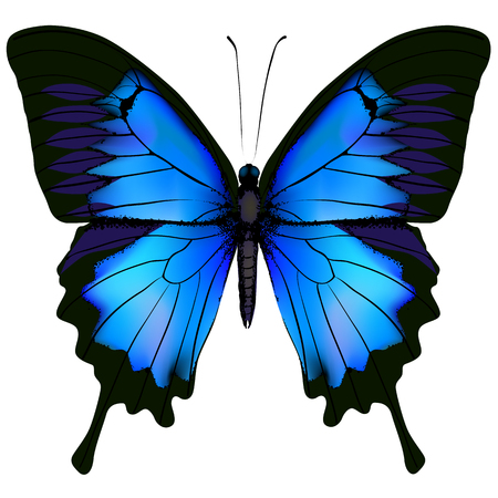 Illustration pour Blue butterfly papilio ulysses. Mountain Swallowtail isolated on white background - image libre de droit