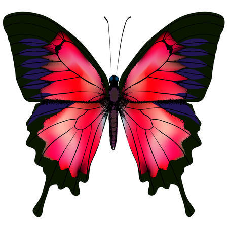 Illustration for Butterfly illustration of beautiful red butterfly isolated on white background - Royalty Free Image