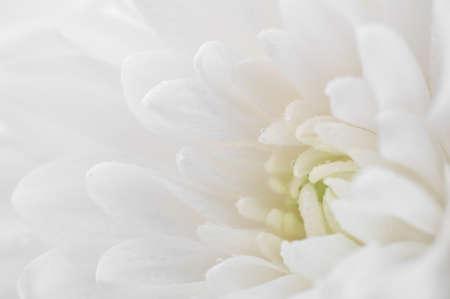 Photo pour White flower macro - image libre de droit