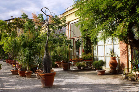 Potted flowers in the botanical garden, Lucca, Tuscany, Italy