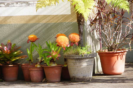 Flowerpots on the porch, Canico, Madeira, Portugal