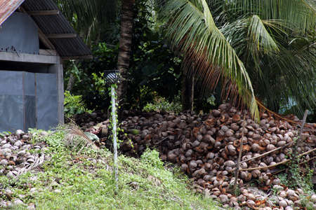 Coconut husks (Cocos nucifera) are collected for further processing, Pintuyan, Panaon Island, Southern Leyte, Philippines