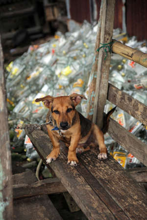 chained dog in front of a mountain of empty liquor bottles, Pintuyan, Panaon Island, Southern Leyte, Philippines