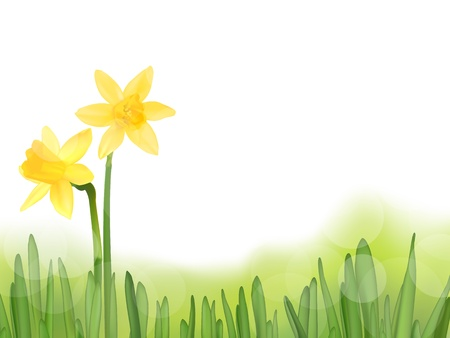 Grass with daffodils, vector illustration