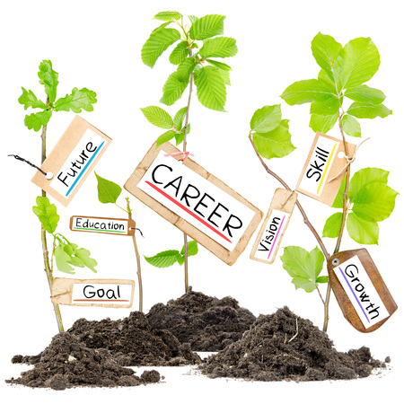 Photo pour Photo of plants growing from soil heaps with CAREER conceptual words written on paper cards - image libre de droit