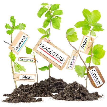 Photo of plants growing from soil heaps with LEADERSHIP conceptual words written on paper cards