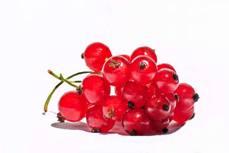 currant and white background