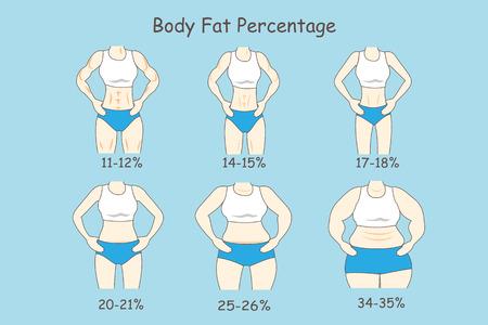 Cartoon woman represent body fat percentage, great for health care concept