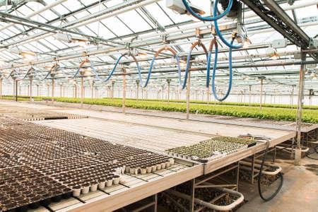 Foto de Green House and green vegetable. Young plants growing in a very large nursery - Imagen libre de derechos