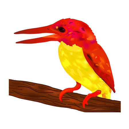 Bird rufous back kingfisher with red head and wing