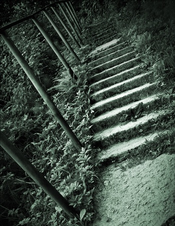 Old concrete stairs in the forest  Monochrome green toned photo